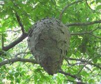 Hornet Nest 1