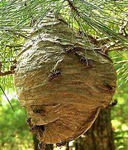 Hornet Nest 2