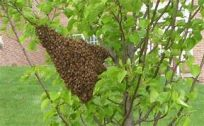 Swarm 3