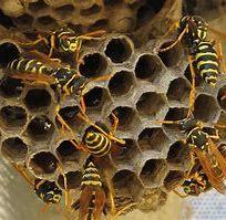Wasp Nest 2