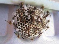 Wasp Nest 3